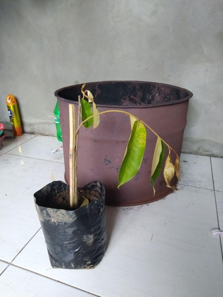 Image #1 from Nanang Prihartanta